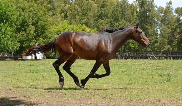 Horse, Career, Horse Race, Horse Runs, Horse Free, Mare