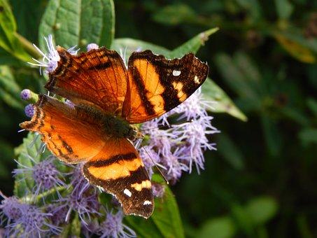 Butterfly, Orange, Sucking, Hostal