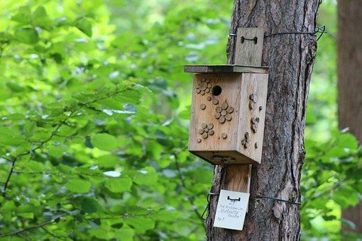 Nestbox, Bird House, Bird Box, Park, Outside Outdoors