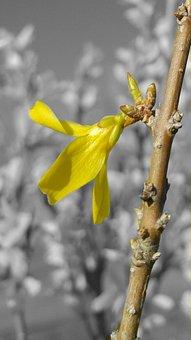 Bud, Flower, Sapling, Branch, Yellow, Yellow Flower