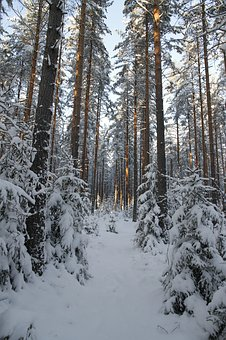 Winter, Forest, Snow, White, Nature, Time Of Year