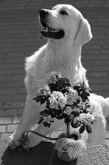 Dog, Puppy, Friend, Cute, Pet, Animal, Adorable, White