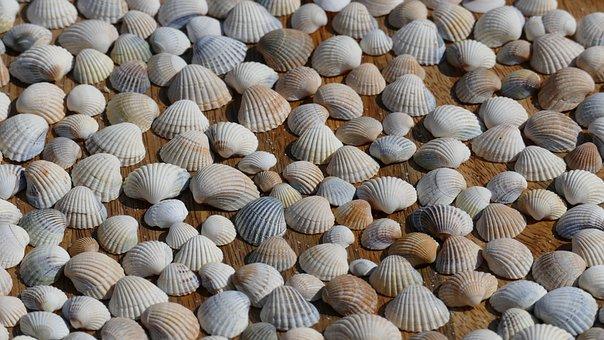 Mussels, Decoration, Sea, Maritime, Mussel Shells