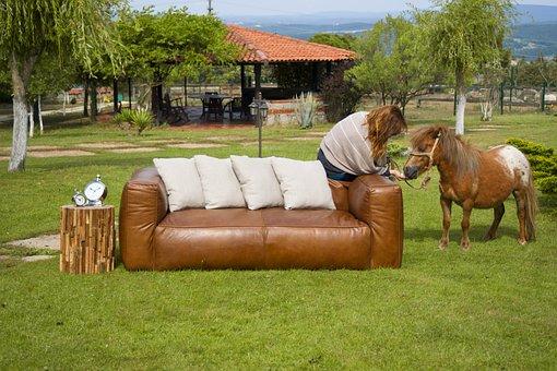 Armchair, Horse, Furniture, Decorative, Architecture