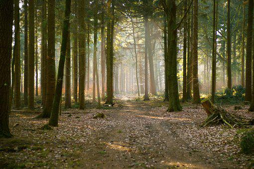Forest, Fog, Morning, Sunbeam, Nature, Trees, Autumn