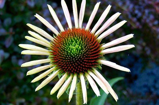 Flower, Nature, Plant, Garden, Herb, Natural