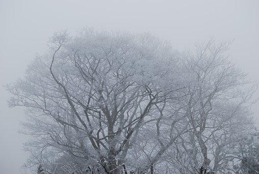 Tree, Fog, Frost, England, Lincolnshire, Snow, Mist