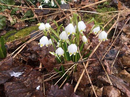 Spring Clock, Spring, White, Flower, White Flower
