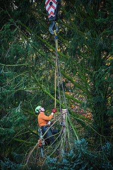 Work, Tree, Wood, Fir Tree, Climb, Saw, High, Nature
