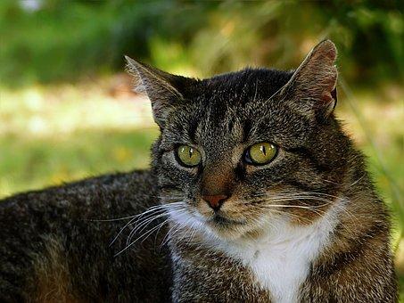 Animal, Cat, Domestic Cat, Felis Silvestris Catus