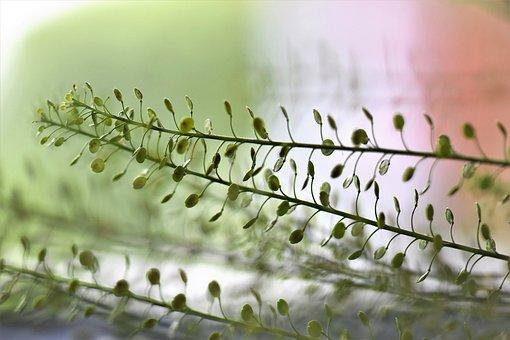 Plant, Green, Leaves, Stalk, Deco, Leaf, Green Leaf