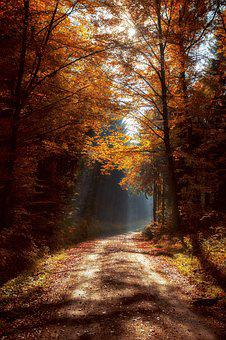 Forest, Mood, Light Beam, Forest Path, Landscape, Trees