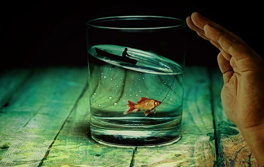 Water Glass, Angler, Fish, Goldfish, Surreal, Miniature