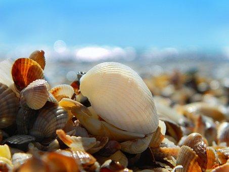 Sea, Summer, Beach, Water, Wave, Sand, Sky, Seashells
