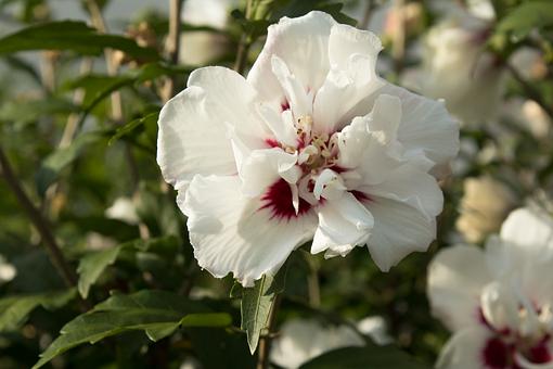 White, Flower, Orchid, White Flower, Nature, Blossom