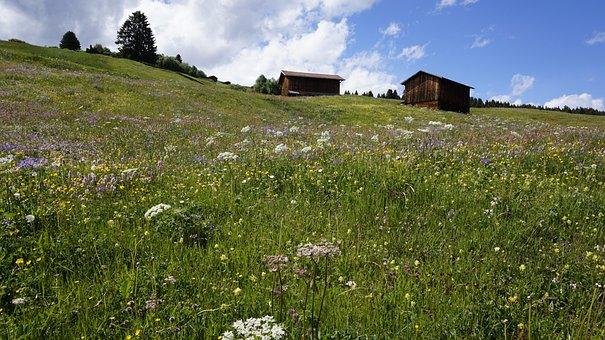 Switzerland, Meadow, Alpine, Hut, Graubünden, Farm
