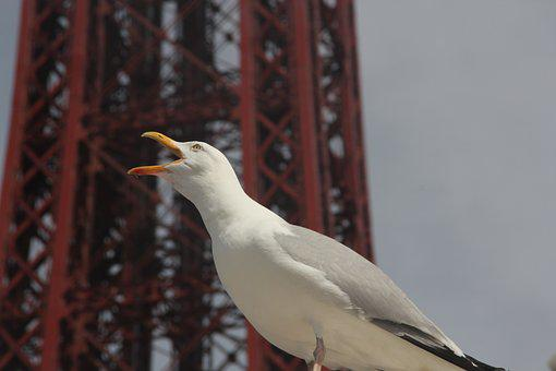 Bird, Birdwatching, Blackpool, England, Uk, Bird Call