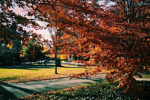 Tree, Nature, Campus