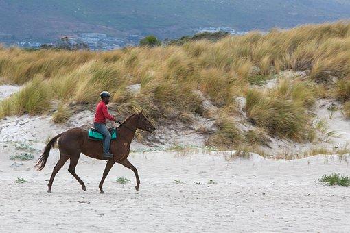 Horse, Rider, Beach, Equestrian, Animal, Horseback