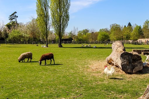 Fields, Sky, Landscape, Nature, Animals, Tree, Summer