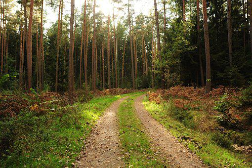 Forest Path, Landscape, Forest, Trees, Nature, Trail