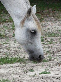 Horse, Sand, Munching, Muscles, Flexing