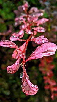 Rain, Raindrop, Drop Of Water, Beaded, Shiny, Nature