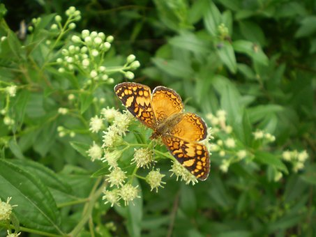 Butterfly, Orange, Small, Hostal, Sucking