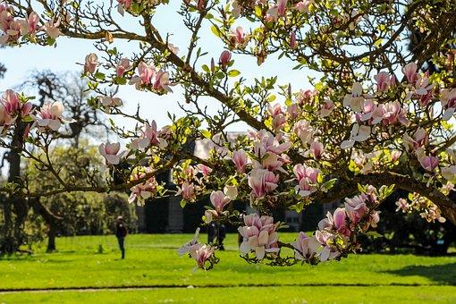 Park, Landscape, Color, Nature, Flower, Tree, Summer