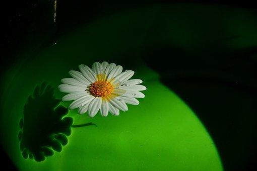 Flower, Drift, On The Water