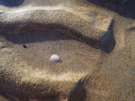 Ebb, Sea, Tides, Shell, Beach, Water, Sand, Most Beach