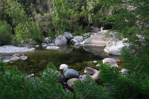 River, Forest, Nature, France, Water Courses, Summer
