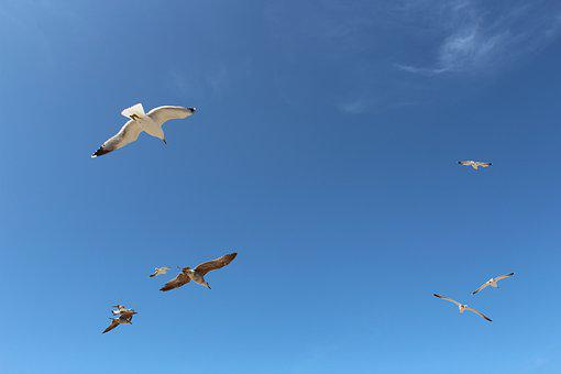 Freedom, Flight, Eternity