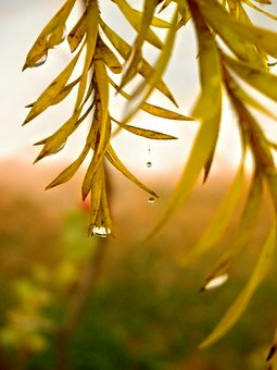 Leaf, Leaves, Dew, Dew Drops, Focus, Drop, Nature, Real