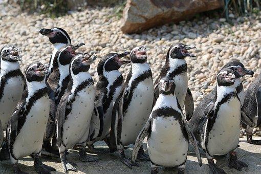 Penguin, Pilsen Zoo, Group, Animal, Nature