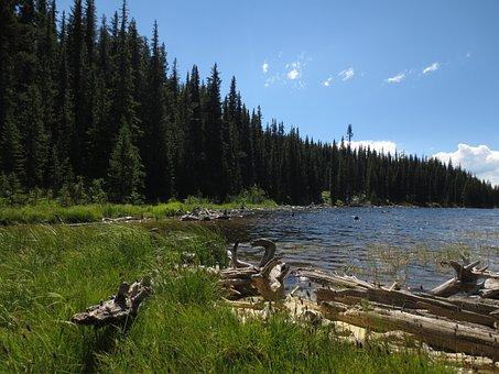 Okanagan, Landscape, Lake Shore, Nature, Driftwood