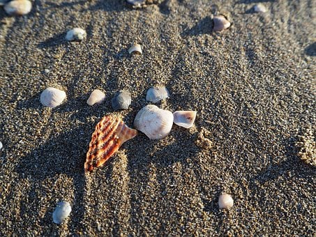 Mussels, Sea, Beach, Mussel Shells, Holiday, Decoration