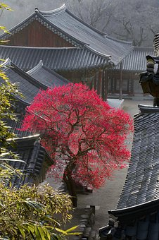 Temple, Spring, Flowers