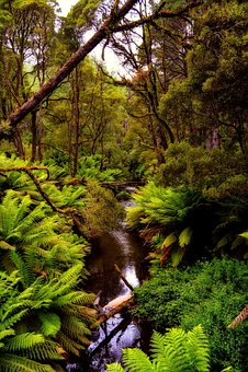 Australia, Forest, Trees, Woods, Stream, Landscape