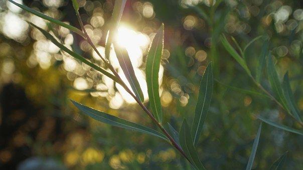 Sunlight, Wallpaper, Leaves, Nature, Light, Summer