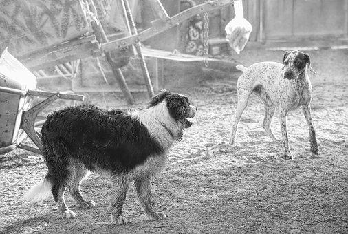 Dog, Canine, Domestic Animal, Picture, Doggie, Animal