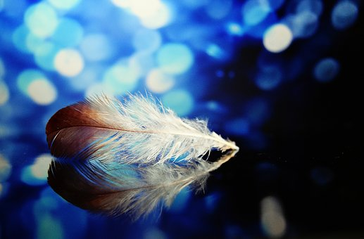 Plume, Blue, Bokeh, Color, Nature, Feather, Colorful