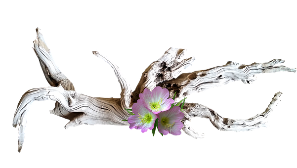 Pink, Flowers, Wood, Driftwood, Decoration, Cut Out