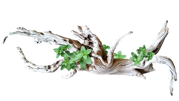 Driftwood, Wood, Decoration, Leaves, Nature, Cut Out