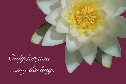 Water Lily, Poetry, Declaration Of Love, Saying