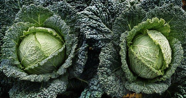Vegetables, Savoy, Arable, Field, Field Order
