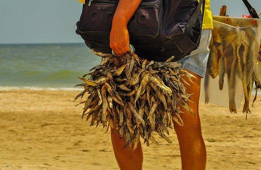 Beach, Sea, Sun, The Seller, Bulls, Fish, Taranka