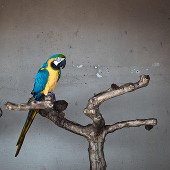 Parrot, Ara, Bird, Colorful, Animal, Plumage, Birds