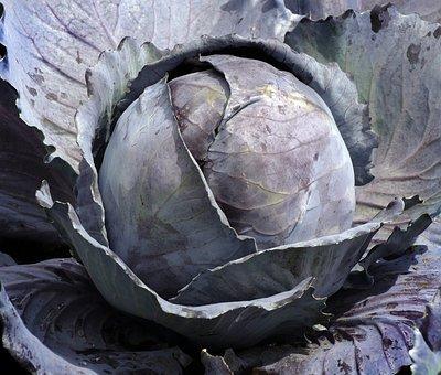 Vegetables, Red Cabbage, Blue Cabbage, Cauliflower