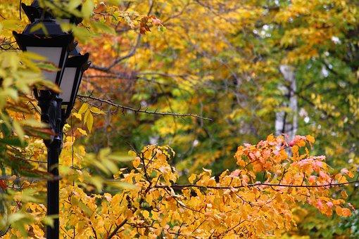 Lantern, Autumn, Park, Street, City, Lights, Russia